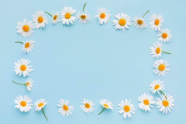 Draufsicht gänseblümchenblumenrahmen Premium Fotos