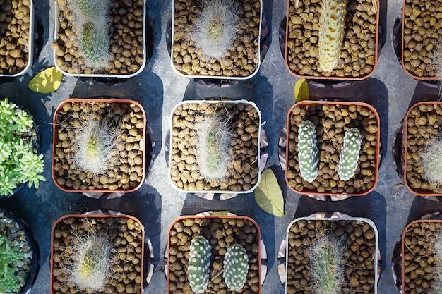 Draufsicht gruppe des kaktus in einem topf Premium Fotos