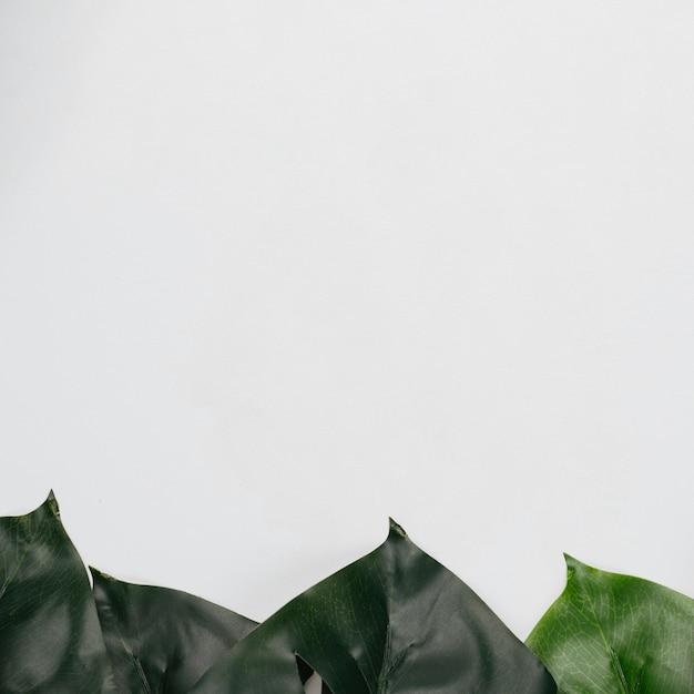 Draufsicht lässt rahmen auf weißem hintergrund Kostenlose Fotos