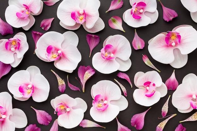Draufsicht orchideenanordnung Premium Fotos