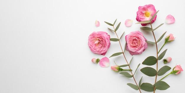 Draufsicht rosenblumen mit kopierraum Kostenlose Fotos