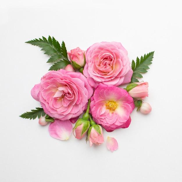 Draufsicht rosenblumen Kostenlose Fotos