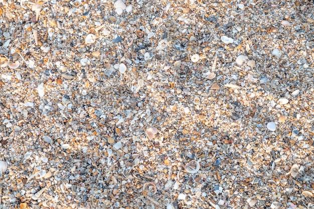 Draufsicht vielzahl von muscheln vom strand Premium Fotos