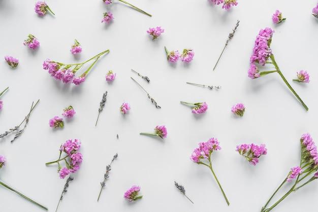 Draufsicht von blumen und von blumenblättern Kostenlose Fotos