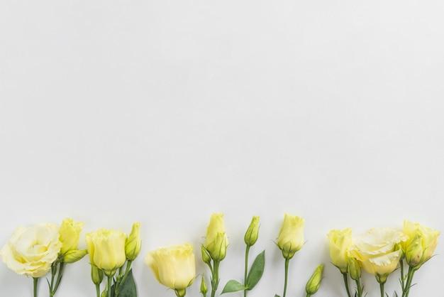 Draufsicht von gelben blumen Kostenlose Fotos