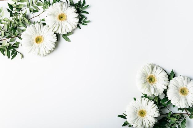 Draufsicht von weißen gänseblümchen Kostenlose Fotos