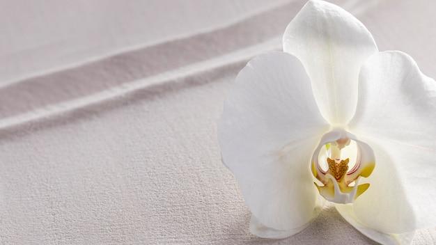 Draufsicht weiße orchidee blühte Kostenlose Fotos