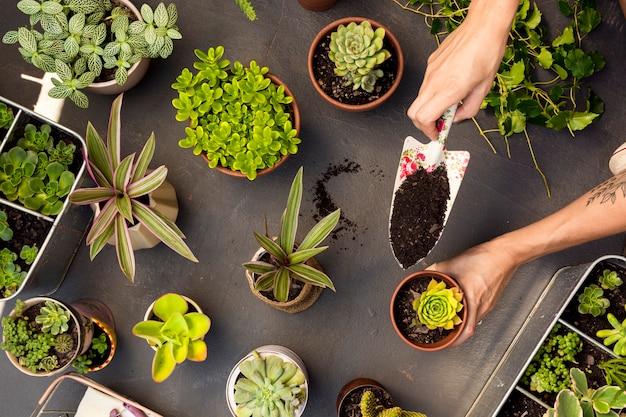 Draufsicht zusammensetzung der pflanzen in töpfen Kostenlose Fotos