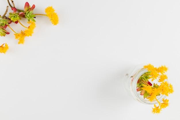 Draufsichtblumen mit kopienraum Kostenlose Fotos