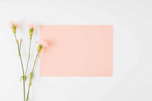 Draufsichtblumen mit umschlag Kostenlose Fotos