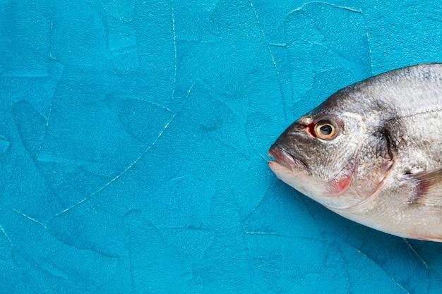 Draufsichtfisch auf blauem hintergrund Kostenlose Fotos