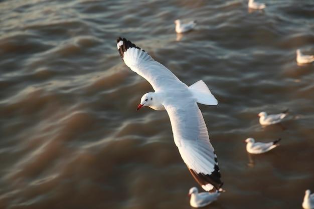 Draufsichtfliegenseemöwen im ozean Premium Fotos