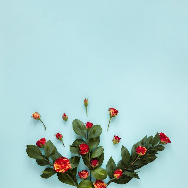Draufsichtsortiment von gartenrosen und -blättern Kostenlose Fotos