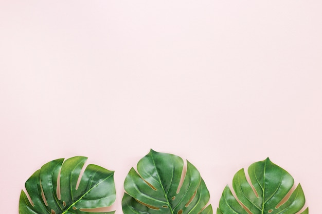 Drei grüne palmblätter auf tabelle Kostenlose Fotos