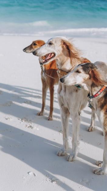 Drei hunde, die auf die küste eines indischen ozeans gehen Kostenlose Fotos
