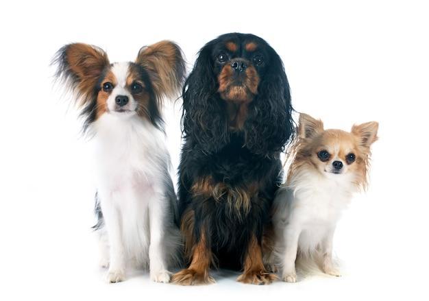 Drei hunde Premium Fotos