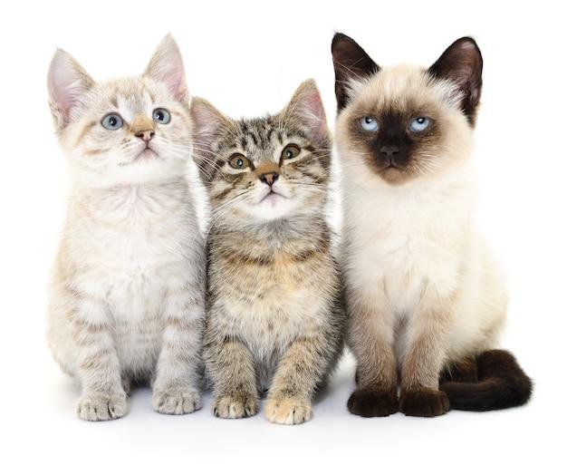 Drei kleine kätzchen auf weiß. Premium Fotos