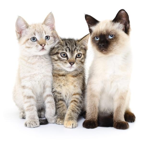Drei kleine kätzchen auf weißem hintergrund. Premium Fotos