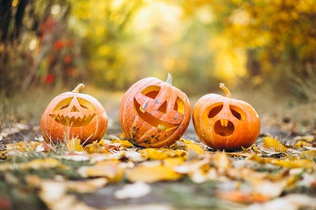 Drei nette halloween-kürbise im herbstpark Kostenlose Fotos