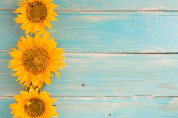 Drei sonnenblumen auf blauem hölzernem hintergrund Kostenlose Fotos