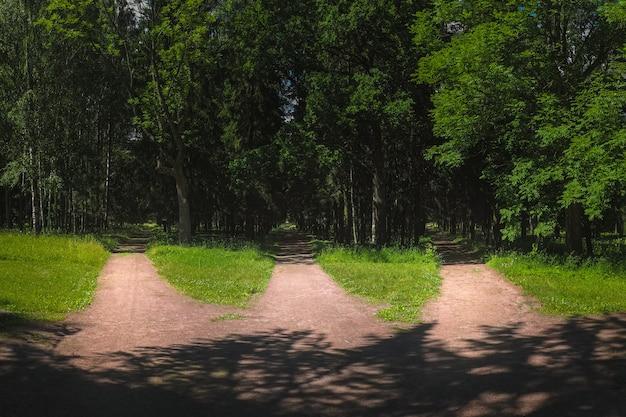 Drei straßen im wald, wegwahl Premium Fotos