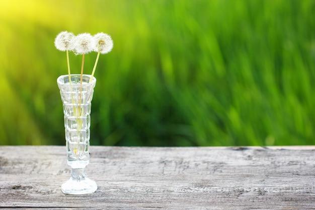 Drei verblaßter löwenzahn in einem vase auf einem grünen hintergrund. bei weichem sonnenlicht Premium Fotos