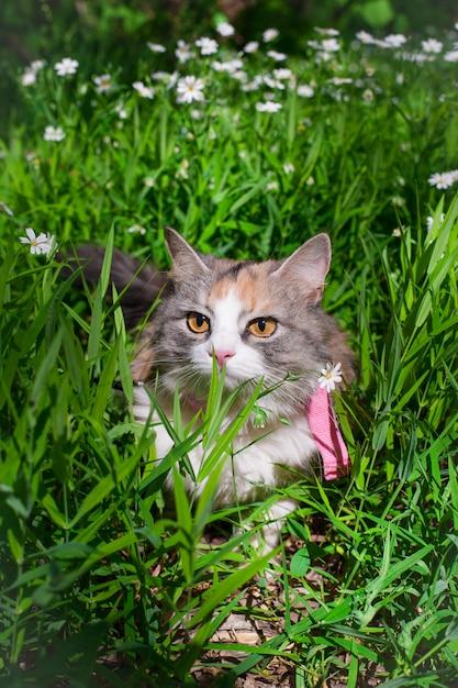 Dreifarbige katze in farben Premium Fotos