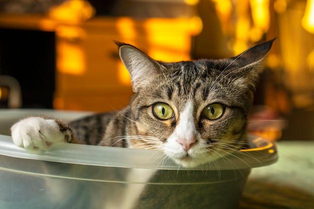 Dunkelgraue katze, die in einem kleinen blatt liegt Premium Fotos