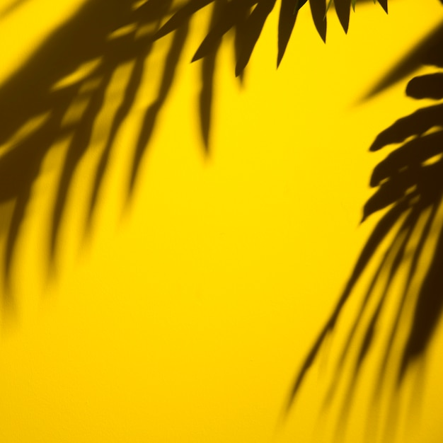 Dunkler schatten von blättern auf gelbem hintergrund Kostenlose Fotos