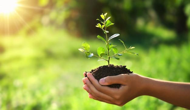 Eco earth day-konzept. hand, die jungpflanze im sonnenschein und in der grünen natur hält Premium Fotos