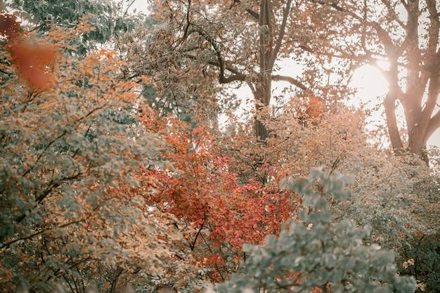 Eiche mit roten, orange und gelben blättern Premium Fotos