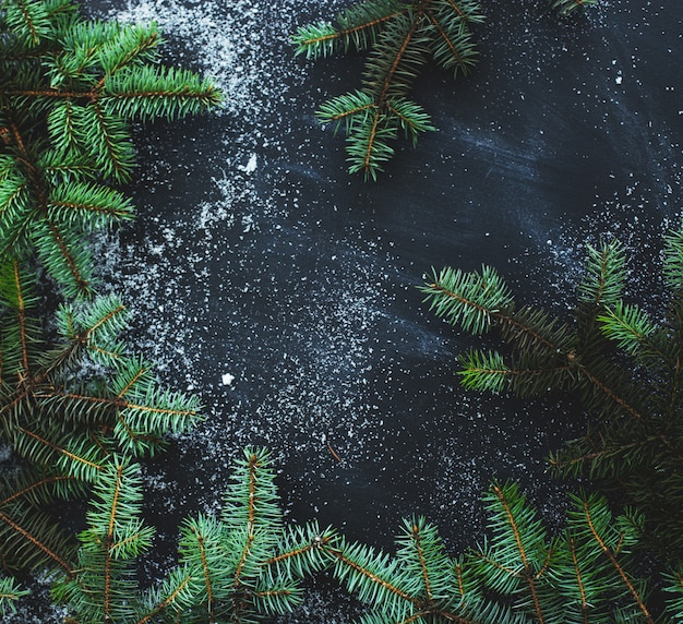 Eichenzweige auf schwarzem hintergrund Kostenlose Fotos