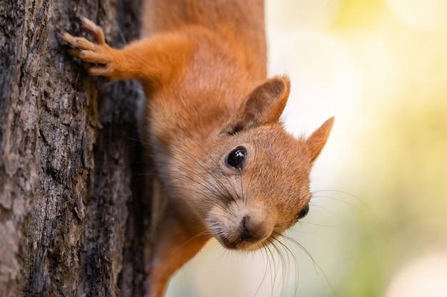 Eichhörnchen auf dem baum Premium Fotos