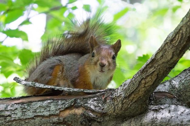 eichhörnchen auf einem baum  premiumfoto