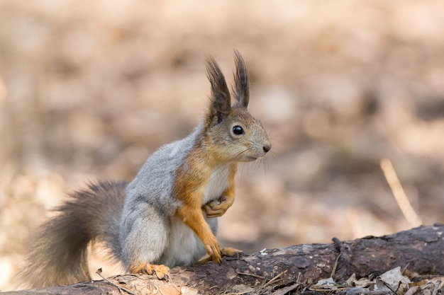 Eichhörnchen auf einem baum Premium Fotos