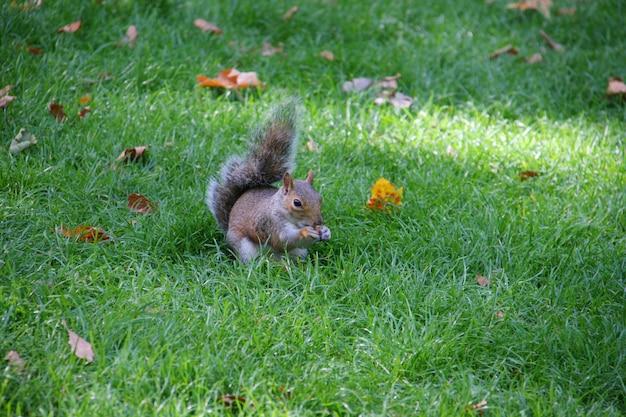 Eichhörnchen hält essen und essen Kostenlose Fotos