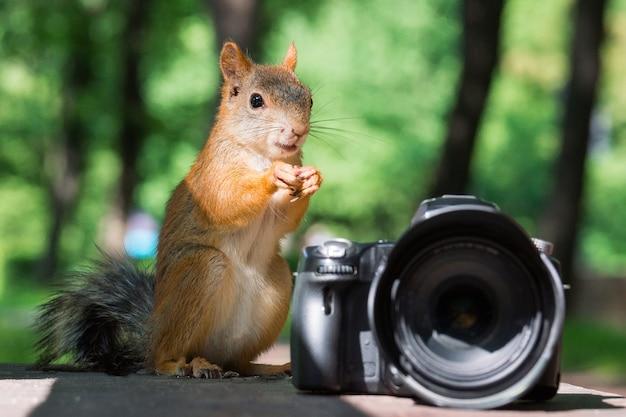 Eichhörnchen und kamera Premium Fotos