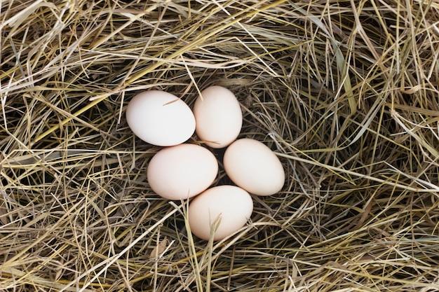 Eier im heu auf dem bauernhof von hühnern Kostenlose Fotos