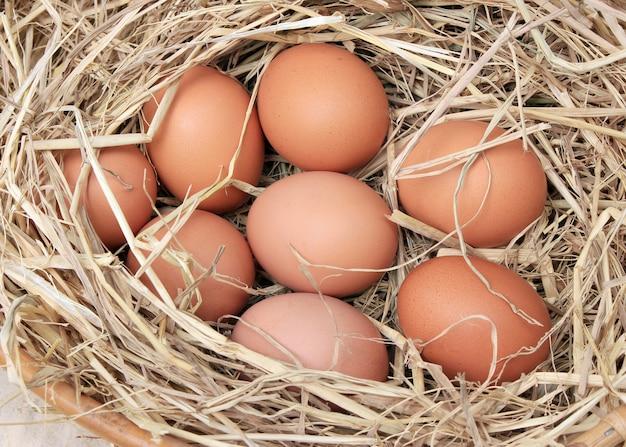 Eier / korb mit eiern im stroh Premium Fotos