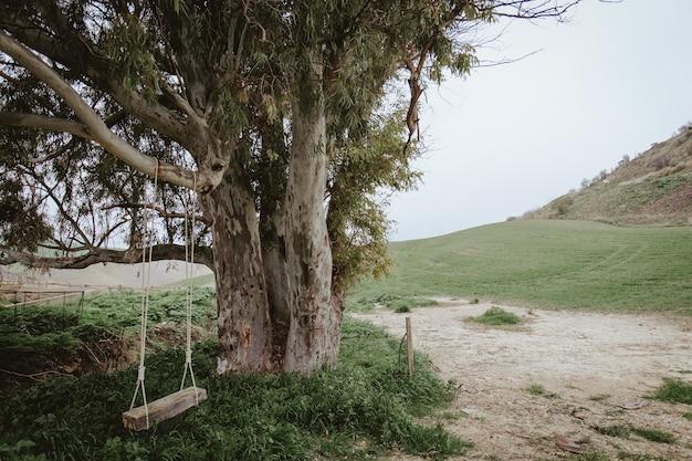 Ein alter baum und eine leere schaukel hingen in der natur daran Kostenlose Fotos