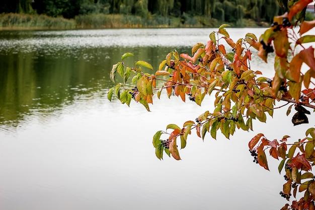 Ein ast mit blättern am fluss, in dem im herbst bäume stehen Premium Fotos