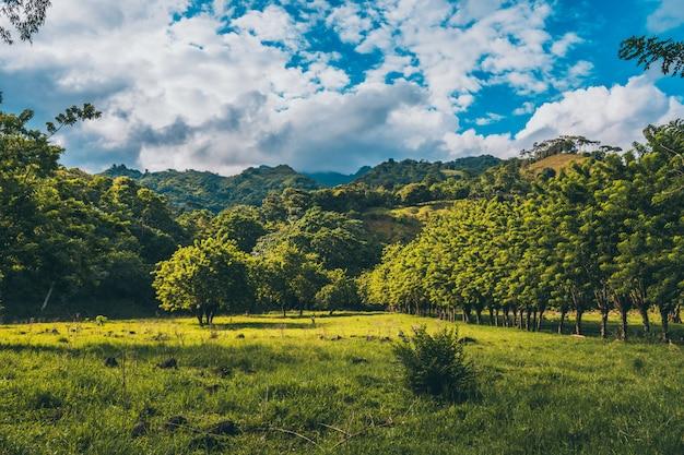 Ein bewölkter tag in der natur mit bergen ein baum Premium Fotos