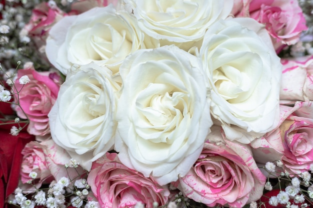 Ein bouquet aus weißen, roten und rosa gefleckten rosen, dekoriert mit gypsophila. Premium Fotos
