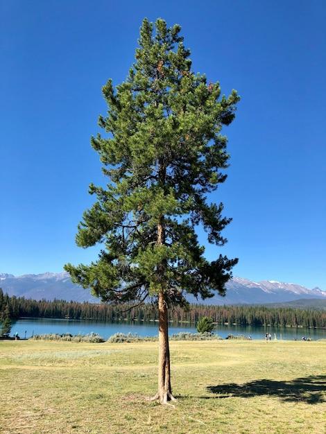 Ein einzelner tannenbaum in der nähe des sees mit bäumen und hohen felsigen bergen Kostenlose Fotos