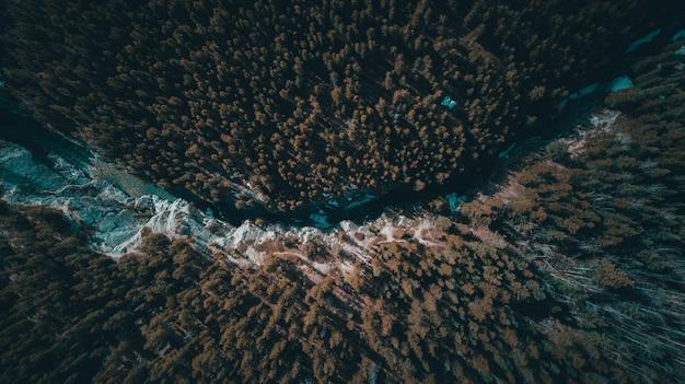 Ein fluss, der durch einen tropischen wald voller bäume fließt Kostenlose Fotos