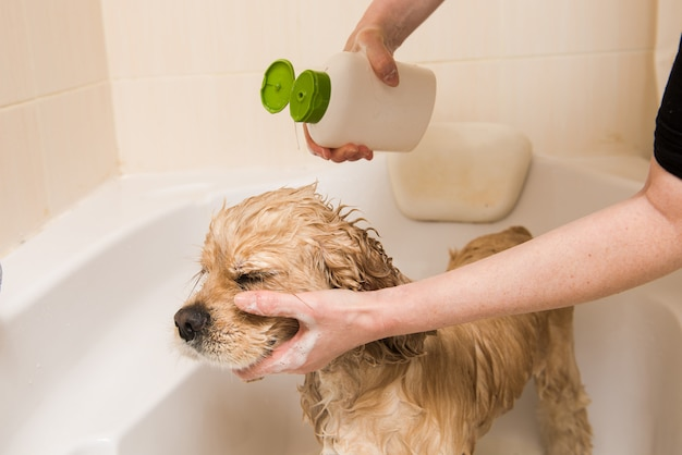 Ein hund, der mit wasser und seife duscht Premium Fotos