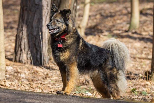 Ein hund über die natur Premium Fotos
