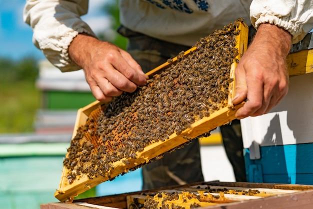 Ein imker richtet die wabe im rahmen mit den bienen über dem bienenstock gerade. Premium Fotos