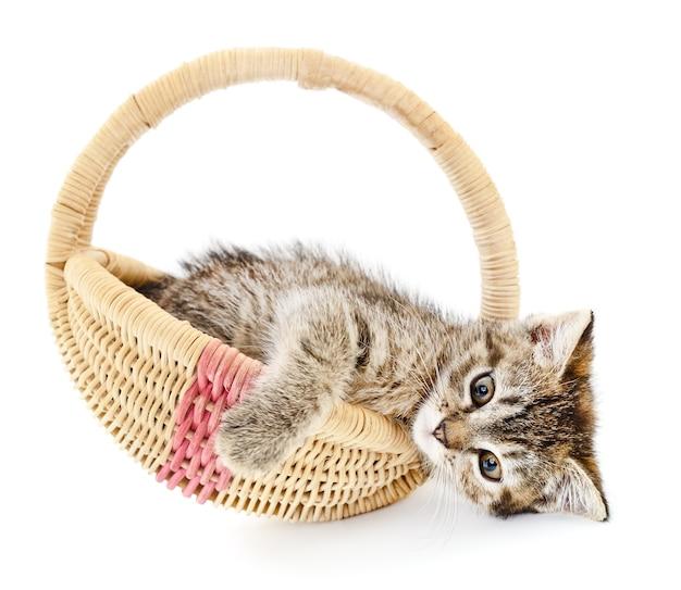 Ein kleines graues kätzchen, das in einem korb sitzt Premium Fotos