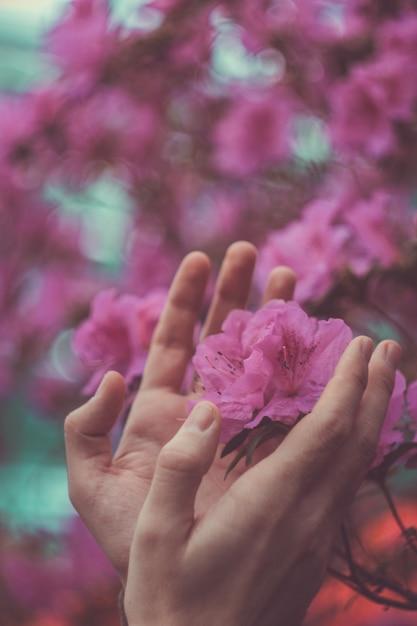 Ein mann schützt die natur, männliche hände um eine rosa blume, die aus dem boden wächst, die ersten jungen triebe von blumen, frühling. konzept von schutz und sorgerecht. Premium Fotos